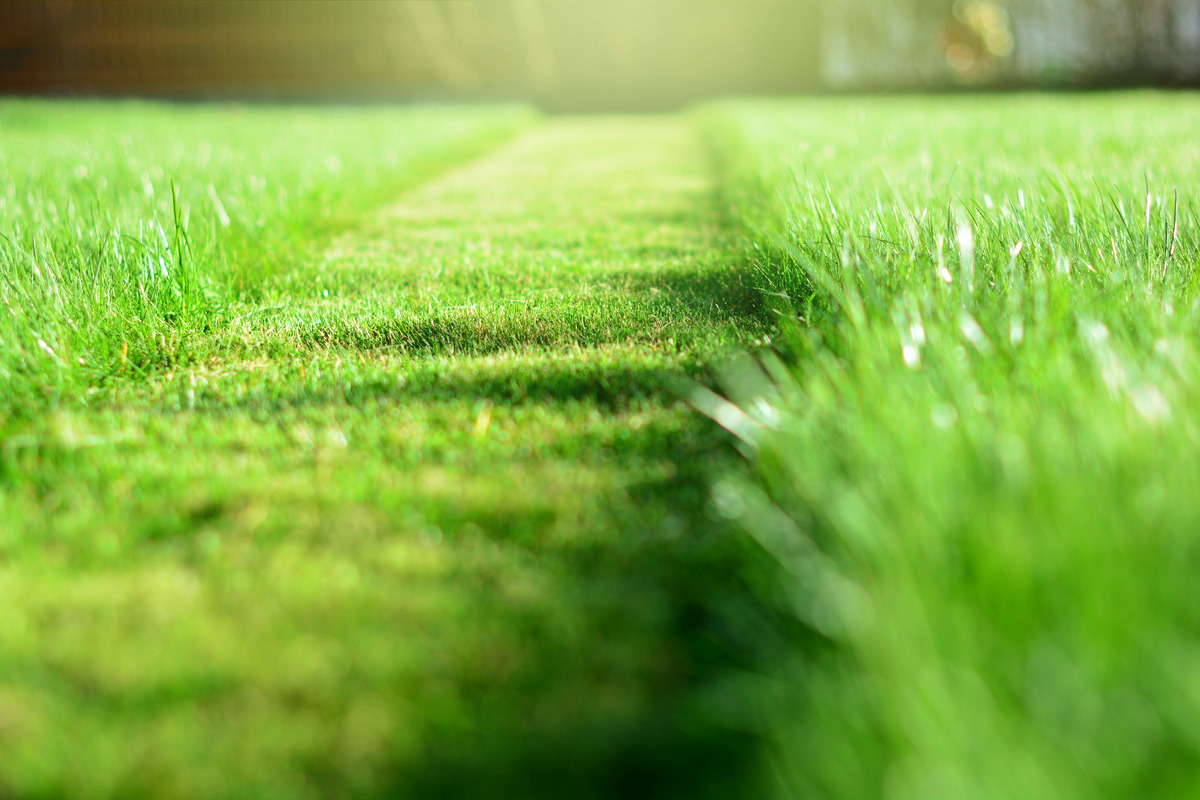 Tonte et entretien de pelouse à Lézignan